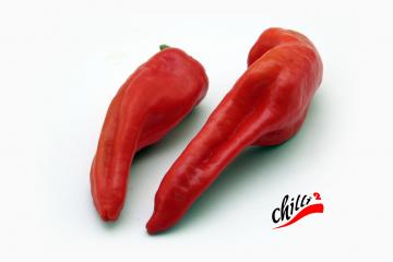 Chilli - Georgia Flame