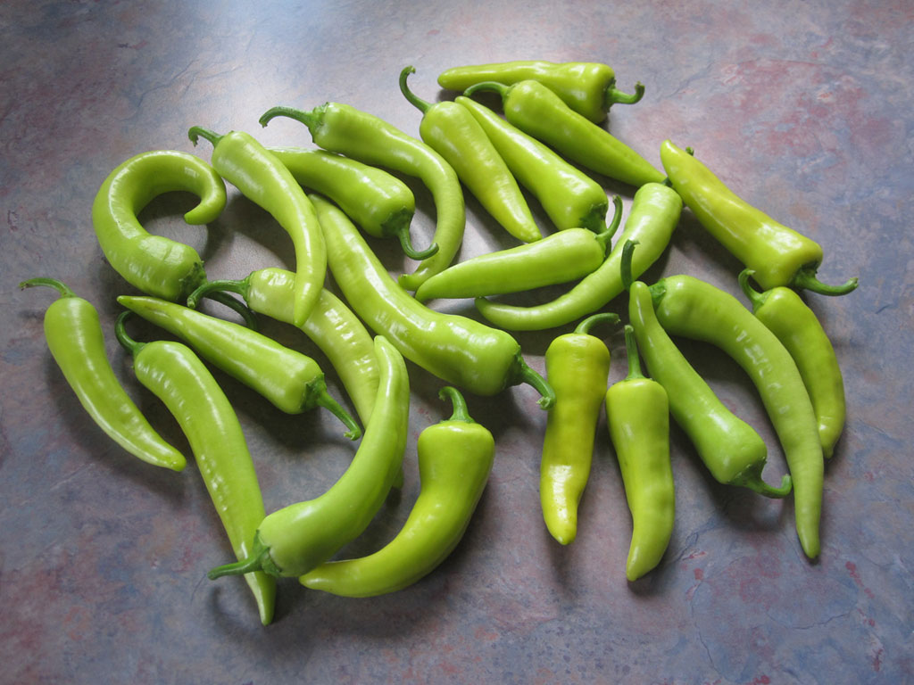 Hot Banana - zdroj: http://upload.wikimedia.org/wikipedia/commons/a/a1/Banana_Peppers_20120903.jpg