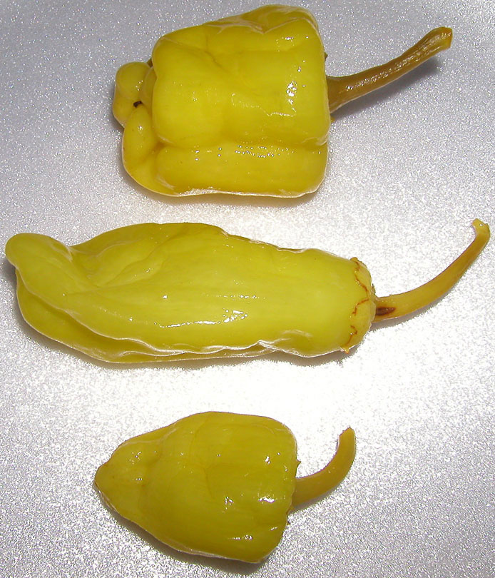 Pepperoncini - zdroj: http://upload.wikimedia.org/wikipedia/en/4/40/Pepperoncini.jpg