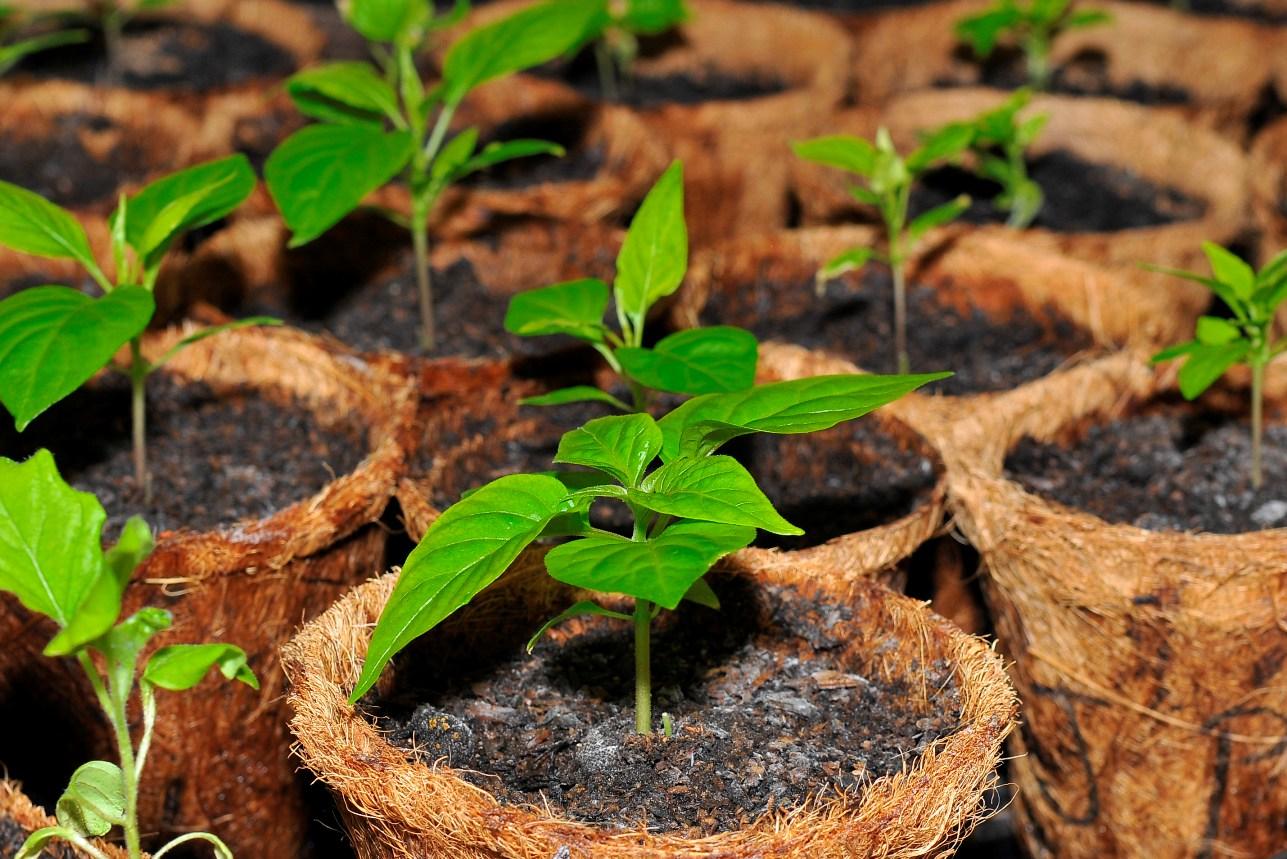Pestovanie-priesady - zdroj: flickr.com